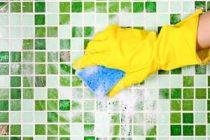 Как можно избавиться от плесени в ванной, 20 лучших средств удаления