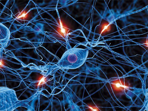 В теле человека также производится электричество